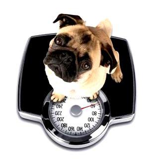 dog-weight-loss