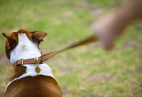 photolibrary_rf_photo_of_dog_on_leash