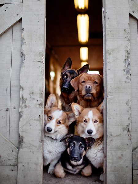 All-The-dogs-Waiting-TO-be-Adopted-By-You